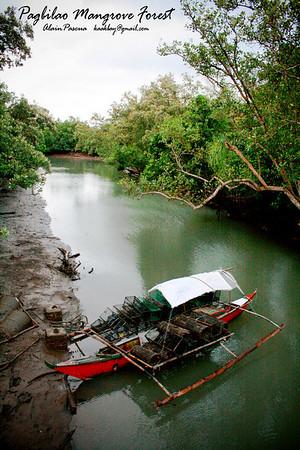 Pagbilao Mangrove Forest