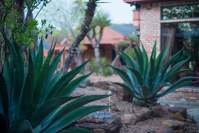 htx-cactus-space031.jpg