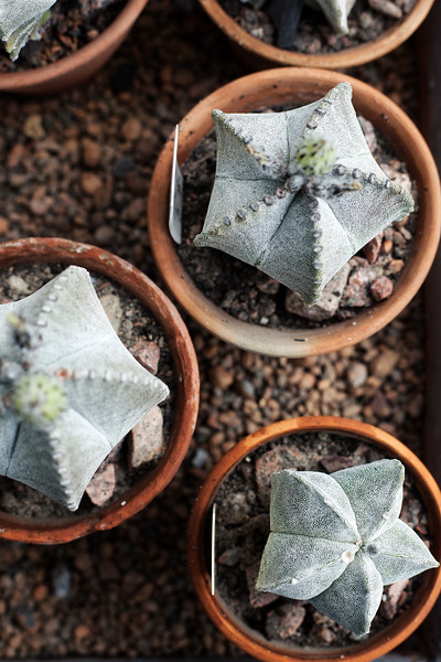 2016-06-10_Cactus_Greenhouse_036.jpg