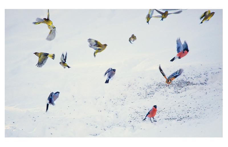 fåglar_kant.jpg