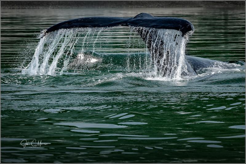 SR3_5036 Whale Tail LPN W.jpg