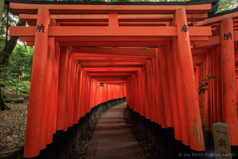 Some of the 10,000 orange torii gates at Fushimi-Inari shrine in Kyoto, Japan.