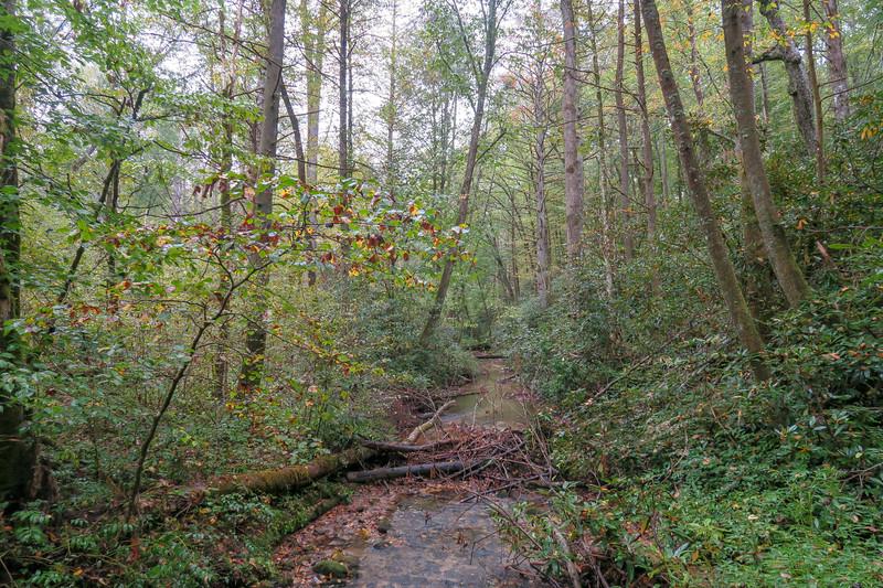 Cedar Rock Creek -- 2,340'