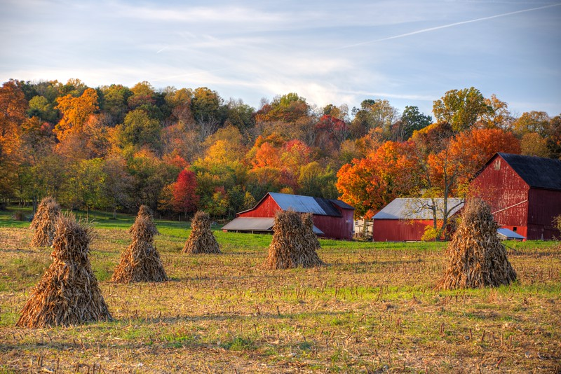 Amish-haystacks-fallOct25-Beechnut-Photos-rjduff.jpg