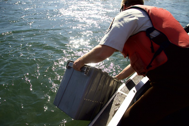Red Bluff Salmon count  2015-11-06