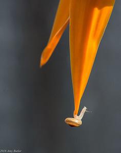 Nature - Orange