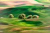 Palouse abstracted