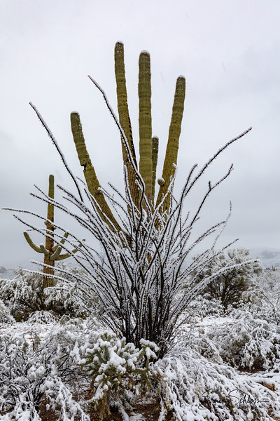 Saguaro East Snow 1-2-2019a 1-2-2019a-.jpg