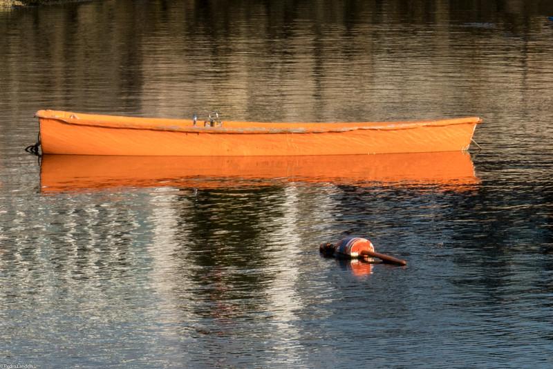 Low in the Water.jpg