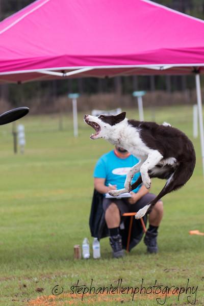_MG_2286Up_dog_International_2016_StephaniellenPhotography.jpg