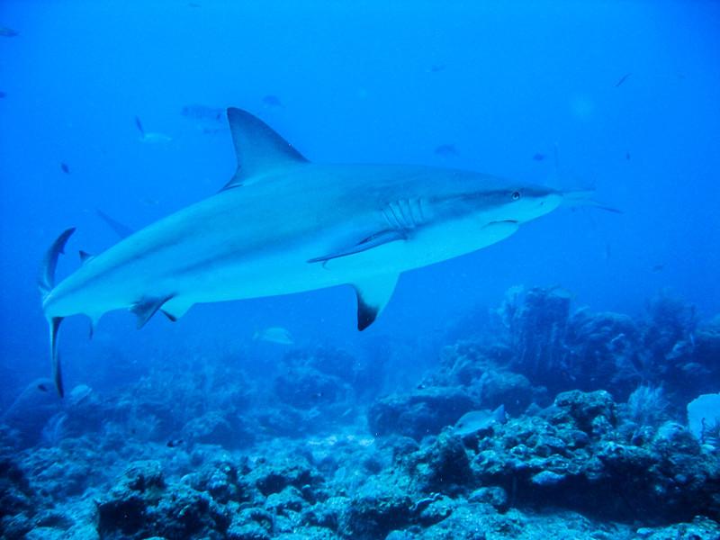 080324, Shark Dive (10).jpg