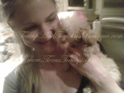 Sold to Annelise P of NY! Red MaltiPoo Puppy 2467