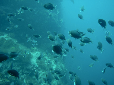 Day2 - Ko Phangan Diving