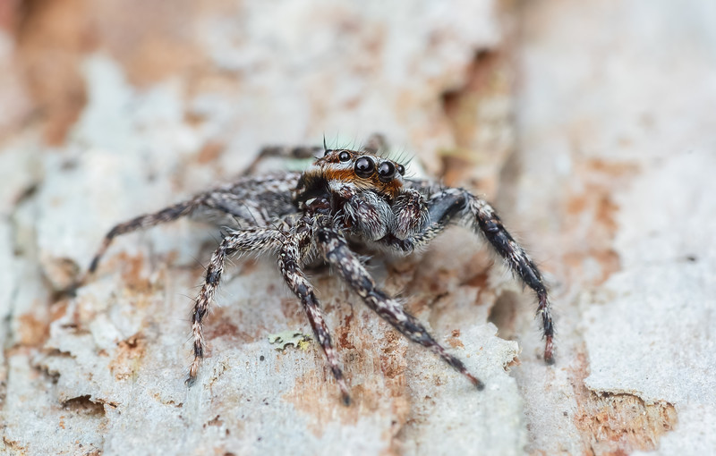 Male tan jumper