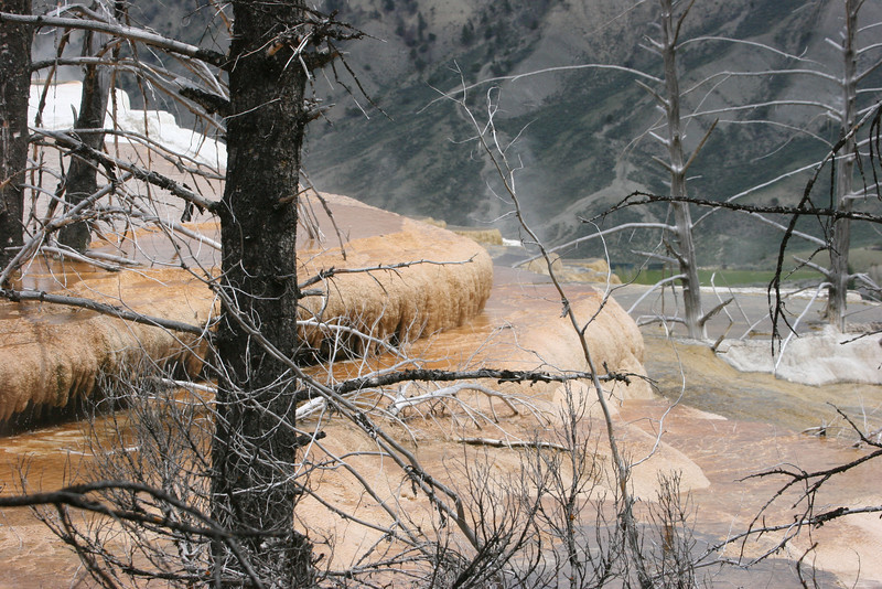 Mammoth Hot Spring Terraces