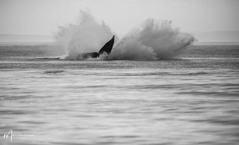 2019-08-31 - Whale Watching-0601_edit.jpg