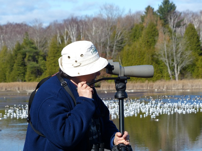 Spotting scopes were very helpful to identify birds on the pond