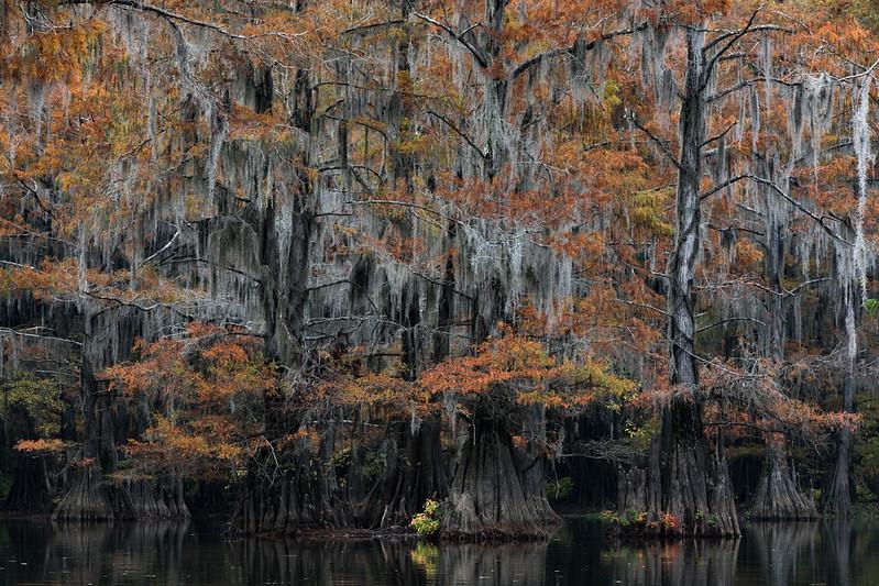Cypress_Swamps_1117_PSokol-1087.jpg