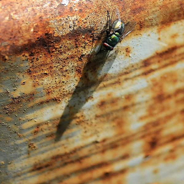 fly on rusted metal box