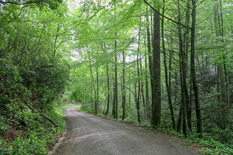 Forest Road 479