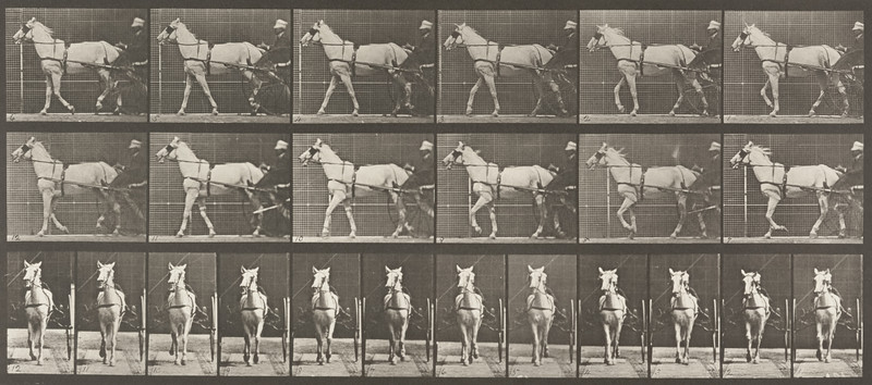 Horse Katydid walking, harnessed to sulky with driver (Animal Locomotion, 1887, plate 586)