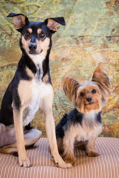 Tuxedo Bark Club-Luna & Calee