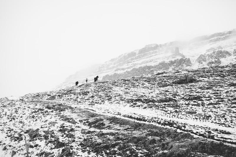 Iceland-84.jpg