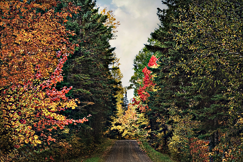 Autumn CallsFINAL.jpg