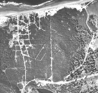 Manzanita aerials