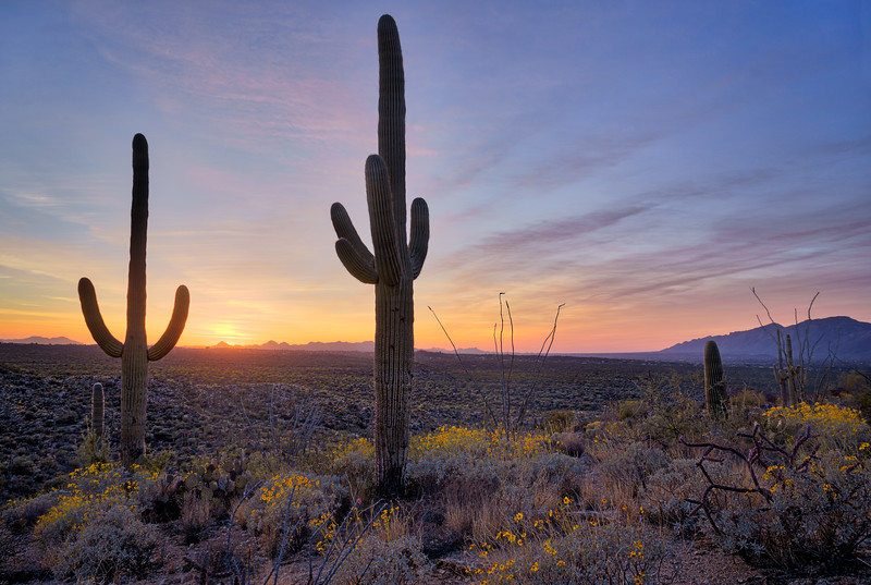 Saguaro-Park-East-Sunset