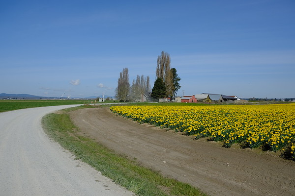 white roads and yellow flowers