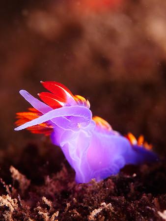 Palos Verdes - Hawthorne Reef 12/30/2017 (Giant Stride)