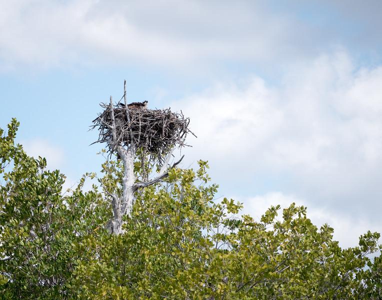 Everglades-28-2.jpg