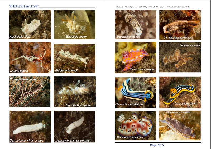 Inside spread booklet.jpg