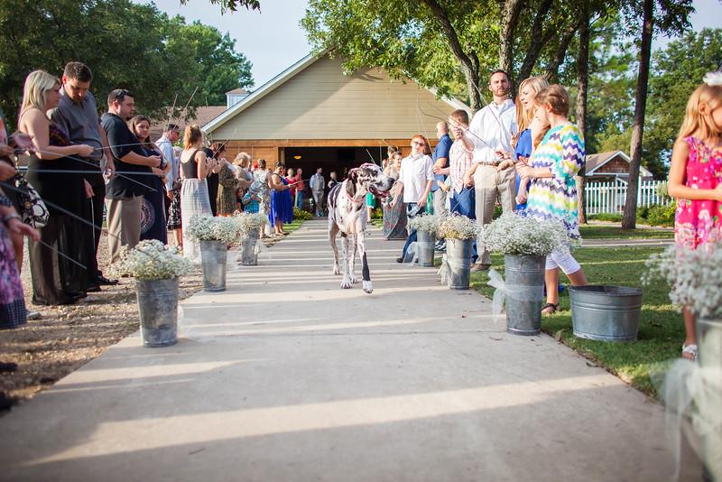 2014 09 14 Waddle Wedding - Reception-735.jpg