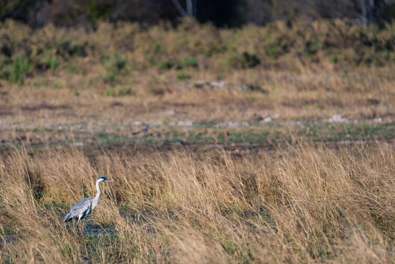 Botswana_June_2017 (1216 of 6179).jpg