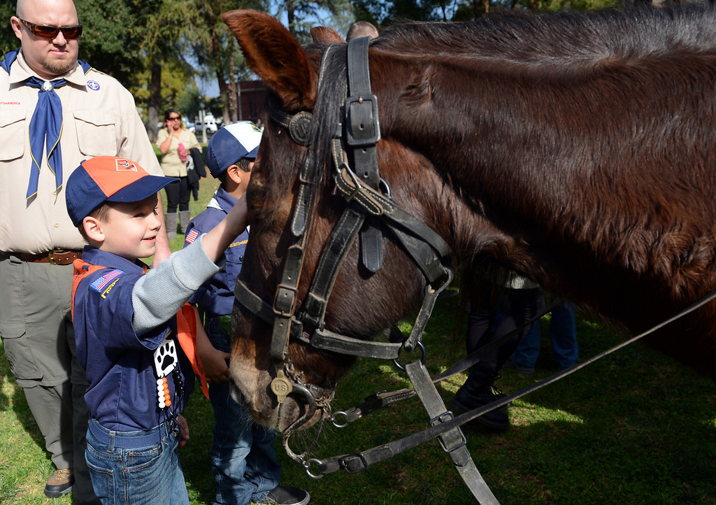 . Boy Scout Pack 247 member Dominic Amori, 6, of San Bernardino, pets Nemo during the 75th annual Lincoln Pilgrimage in Redlands, CA., Saturday, February 8, 2014. (Photo by Jennifer Cappuccio Maher/Inland Valley Daily Bulletin)