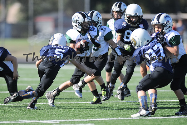 Titans vs Bulldogs Mighty Mite