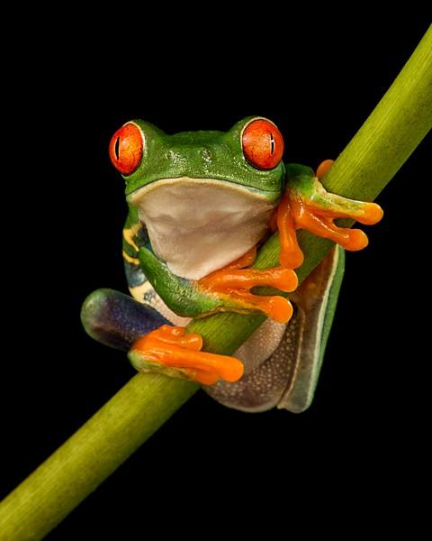 Frogscapes015_Cuchara_2391b_021117_164332_5DM3L.jpg
