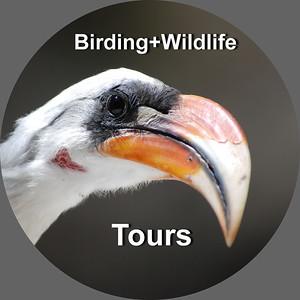 2.- Birding & Wildlife Tours - Ethiopia ,Tanzania, Uganda