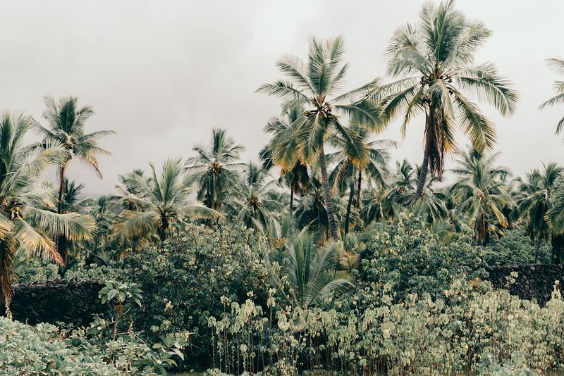 Hawaii20-91.jpg