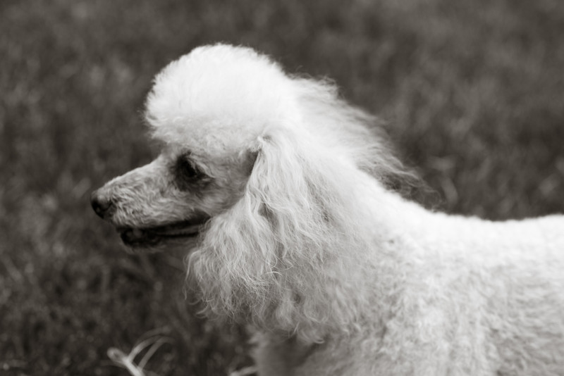 opal mike dogs (1 of 1)-107.jpg