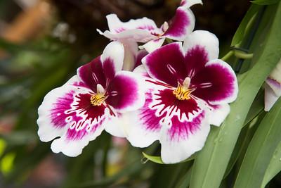 Orchid Daze at Atlanta Botanical Gardens