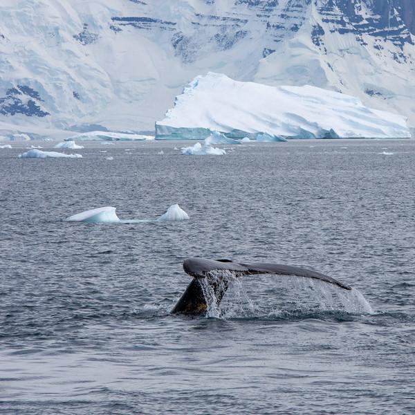 2019_01_Antarktis_03654.jpg