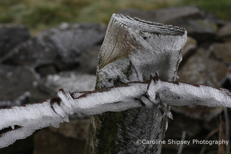 Ice on Fence Post 1