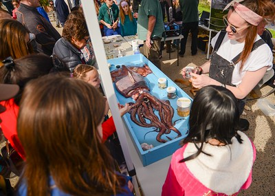 Whalefest Monterey keeps kids entertained at Fisherman's Wharf