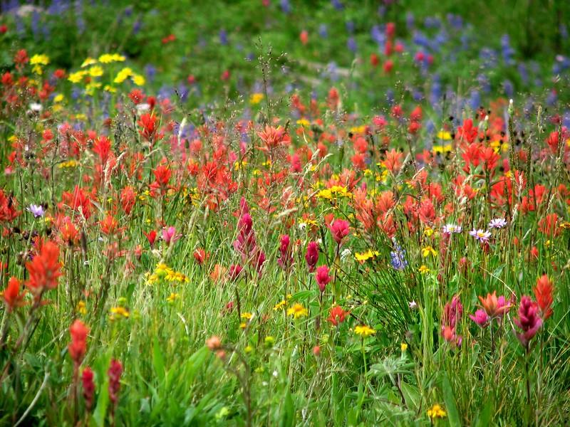 amh FLOWERS (1334).jpg