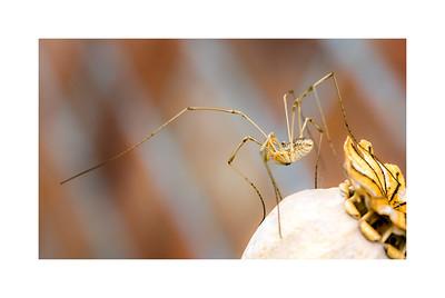 Wildlife:  Spiders & other Arachnids