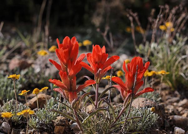 Flora, Fauna & Whatnot