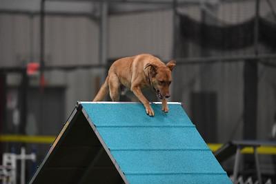 Burlington County Kennel Club AKC Agility Trial October 12-13